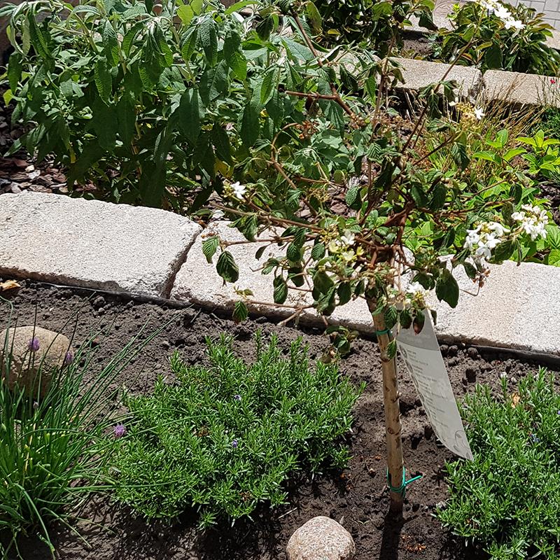 Dach Garten