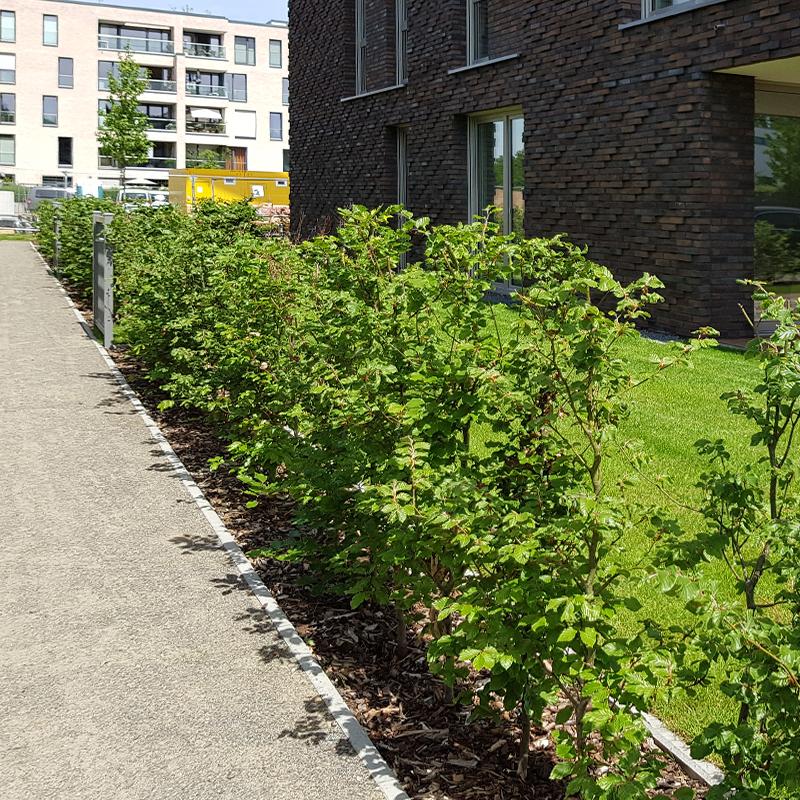 Vorgartengestaltung Bremen